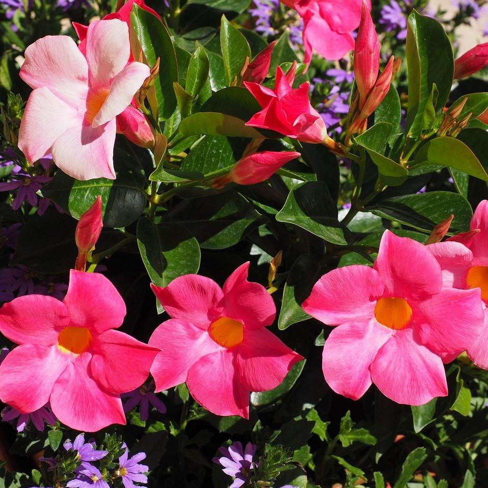 Vivaio Alghero | Florsalondra